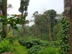 Coffee in Coorg – 4 nights
